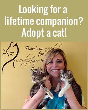 FFACS-Adopt-A-Cat